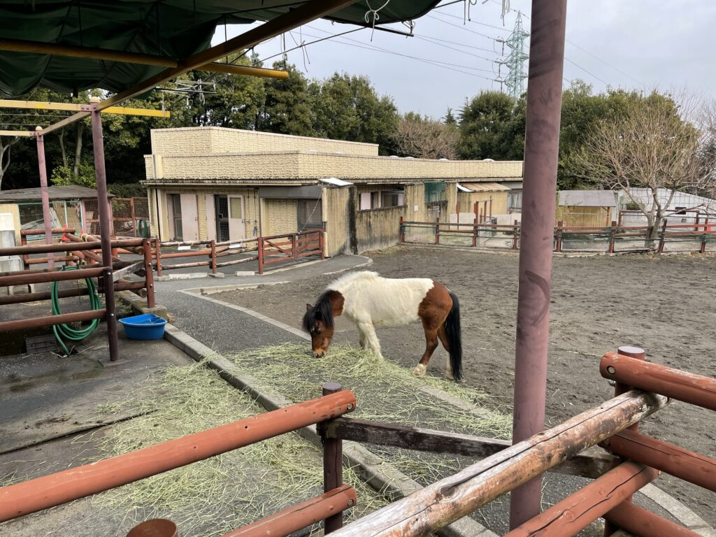 金沢動物園のポニー